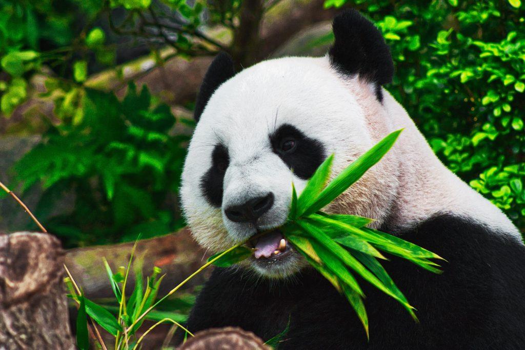 Panda  by Holidu