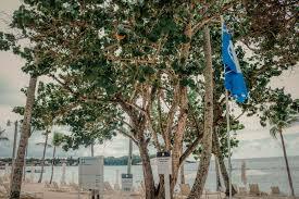 Playa Minitas en Casa de Campo Resort recibe la Certificación Internacional  Bandera Azul 2020-2021 | Casa de Campo Living