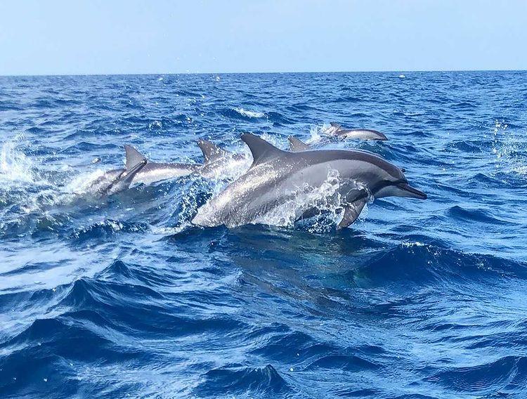 Dolfijnen_by-@p.o.c..jpg